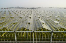 High-Tech Greenhouses Could Be The Future Of Agriculture